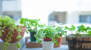 ガーデニングの鉢植え