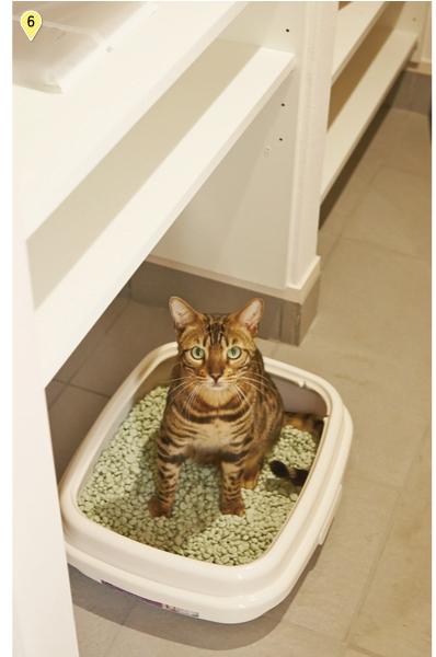 猫専用トイレスペースにはエコカラットを使用